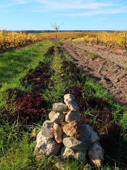 Petit bout de potager au milieu des vignes