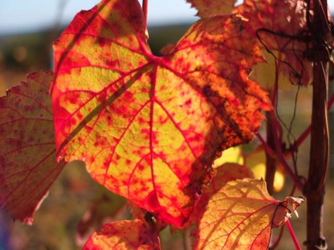 Couleurs vives du côt en automne