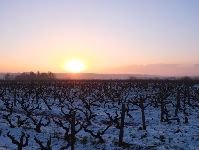 Vieux Gamay hiver 2018